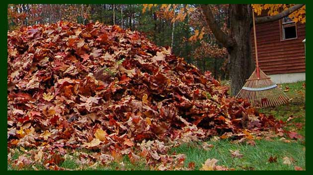 fall leaves removal, leaf raking, yard cleanup